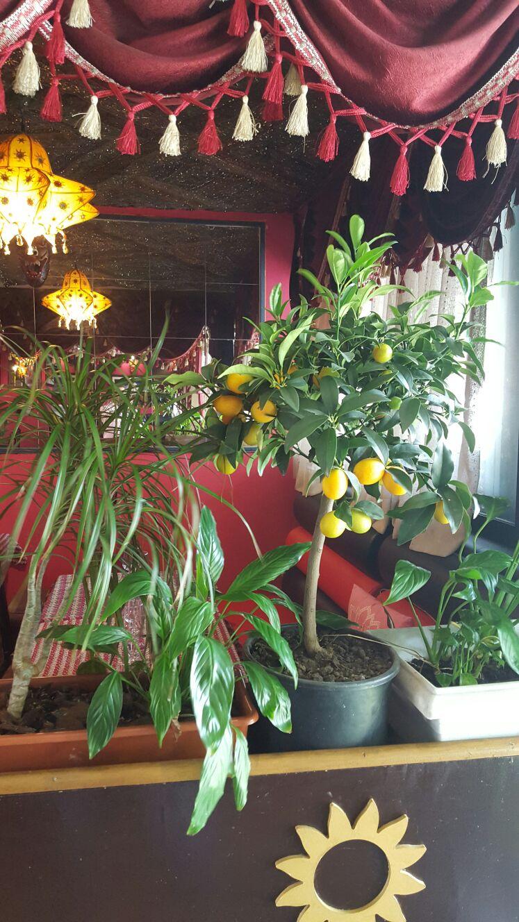 galerie restaurant indien n palais le chemin d himalaya sur evry. Black Bedroom Furniture Sets. Home Design Ideas